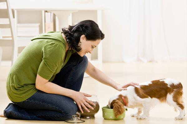 How Pet Care is a Very Challenging and Complex Task